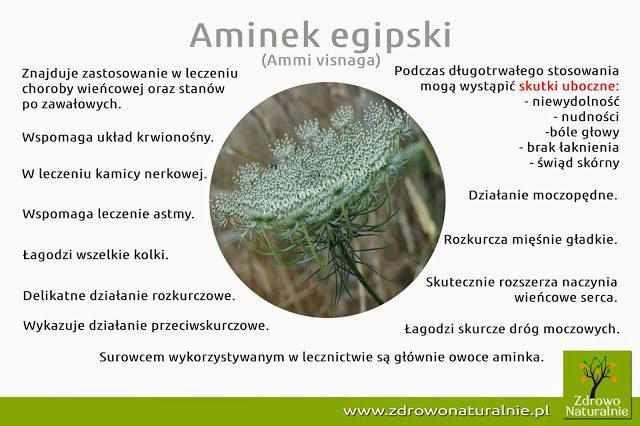aminek2begipski-5885541