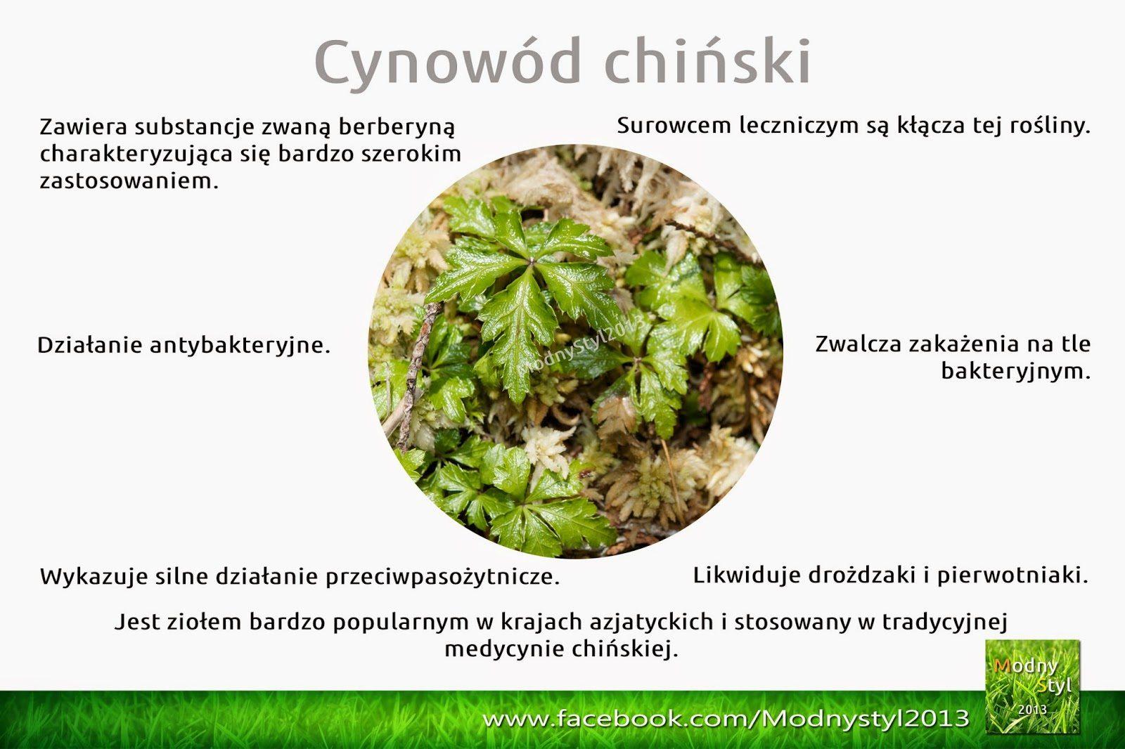cynowc3b3d2bzc582otnica-4738045