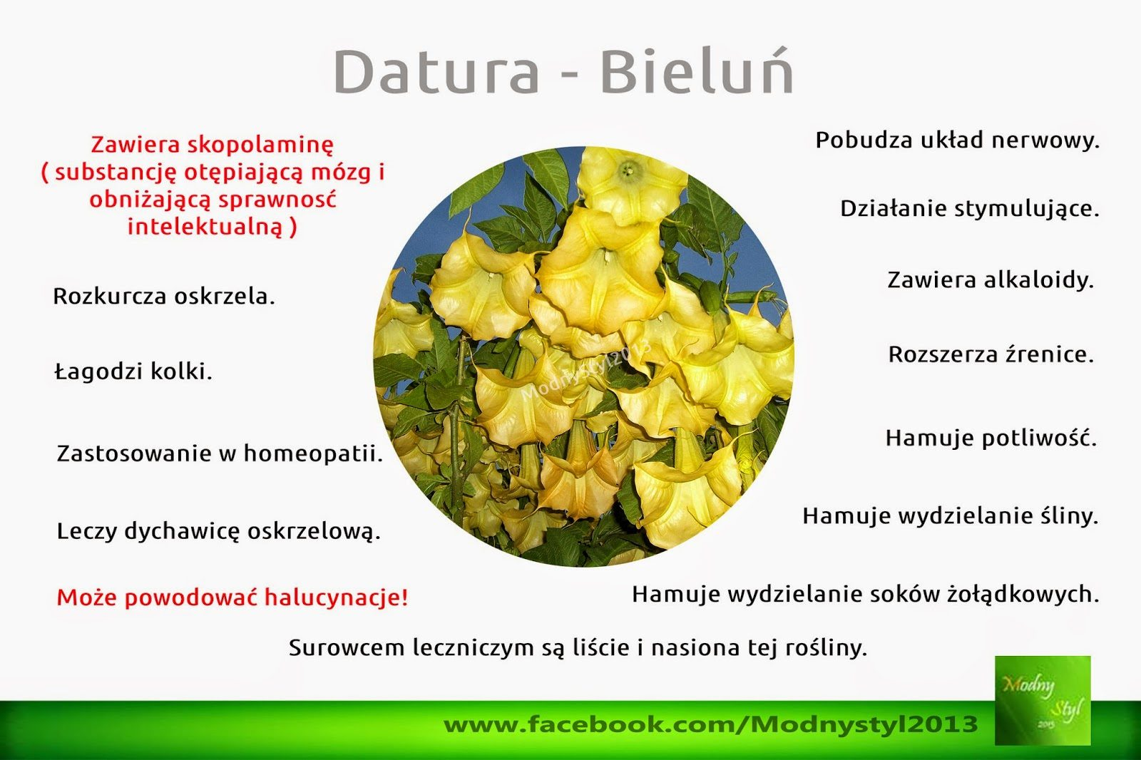 datura-9501087
