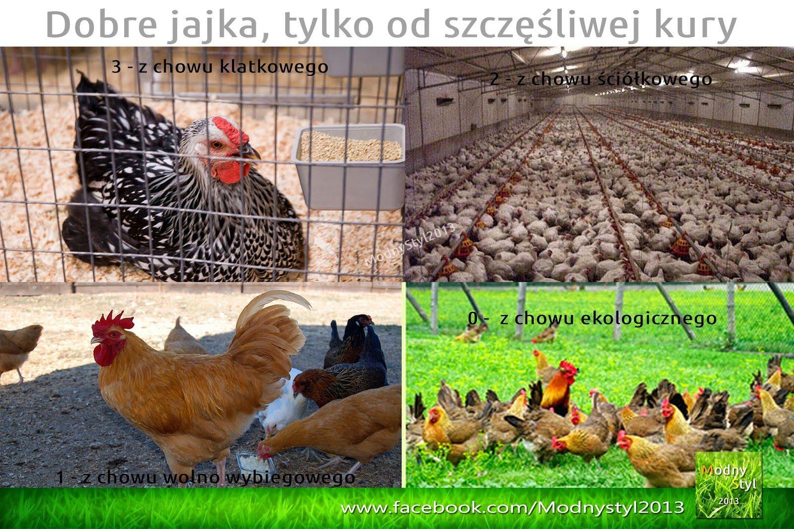jaja-8838400