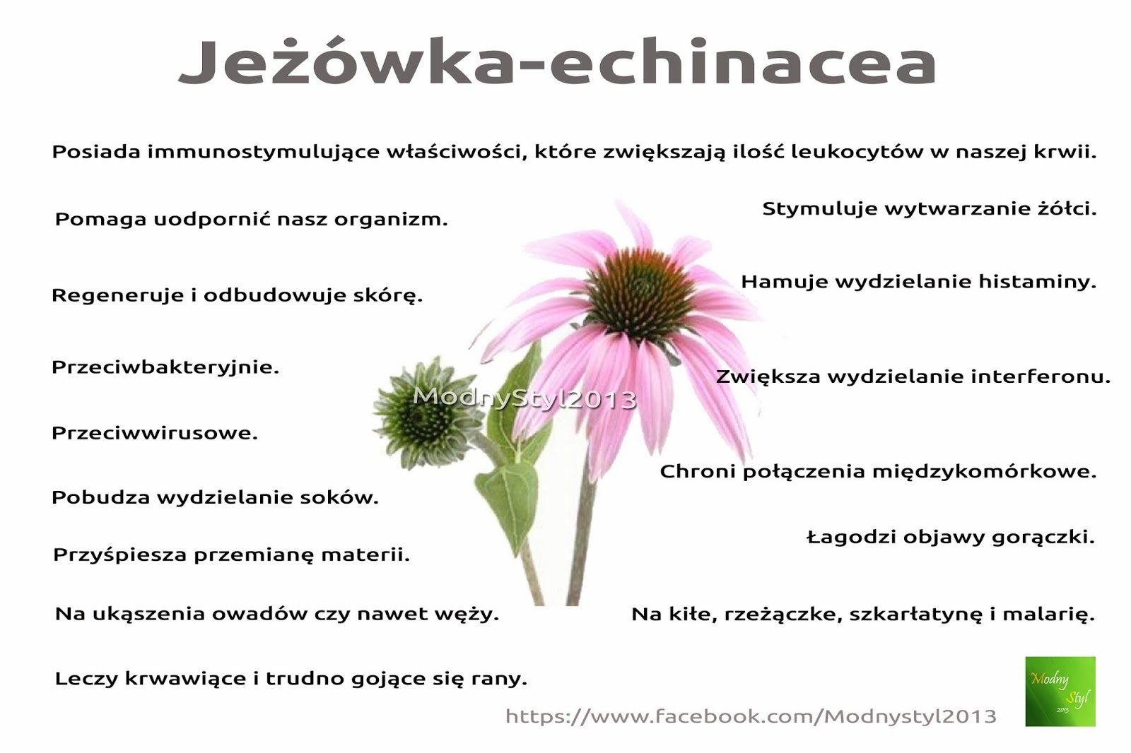 jec5bcc3b3wka-3140930