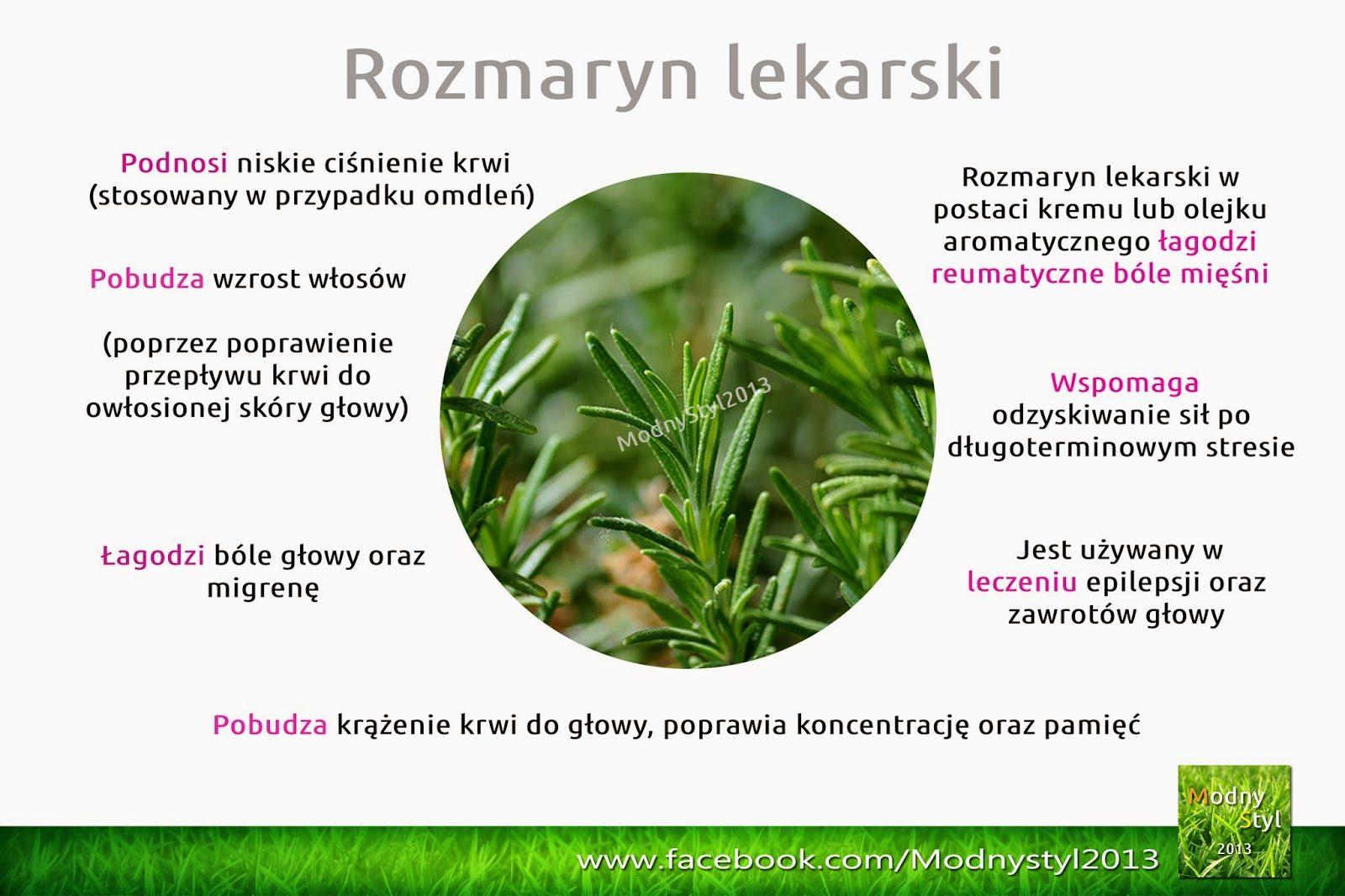 rozmaryn2blekarski-1484209