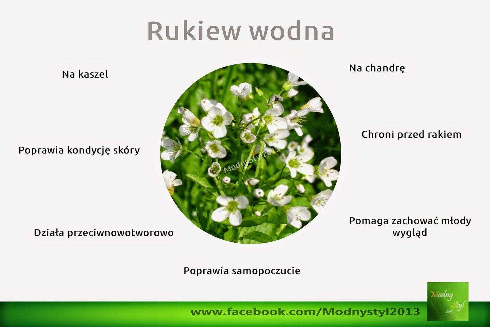 rukiew2bwodna-7144050