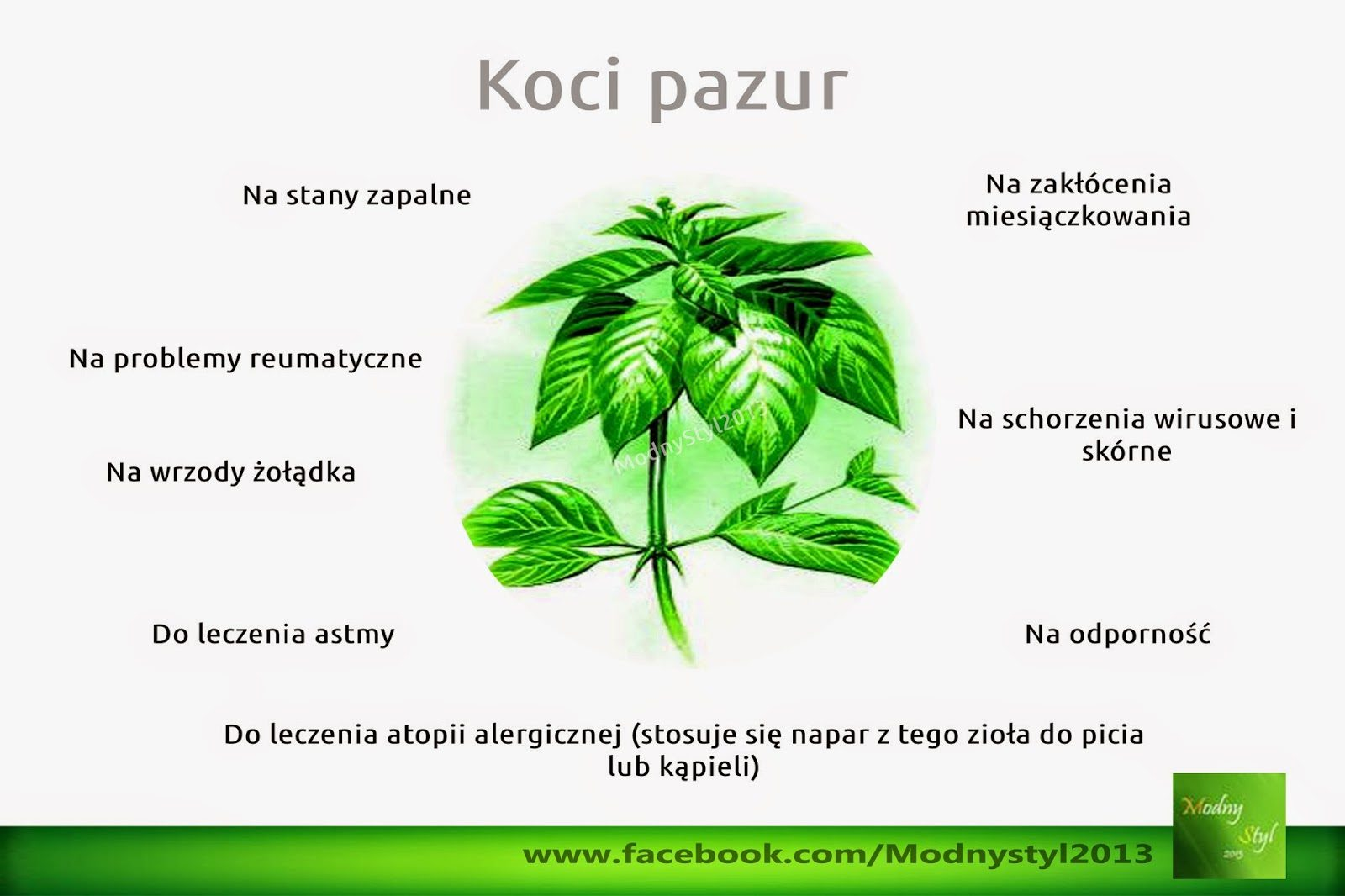 koci2bpazur-8202428
